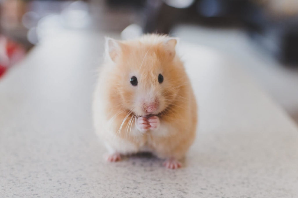 le case di paglia attirano i topi?
