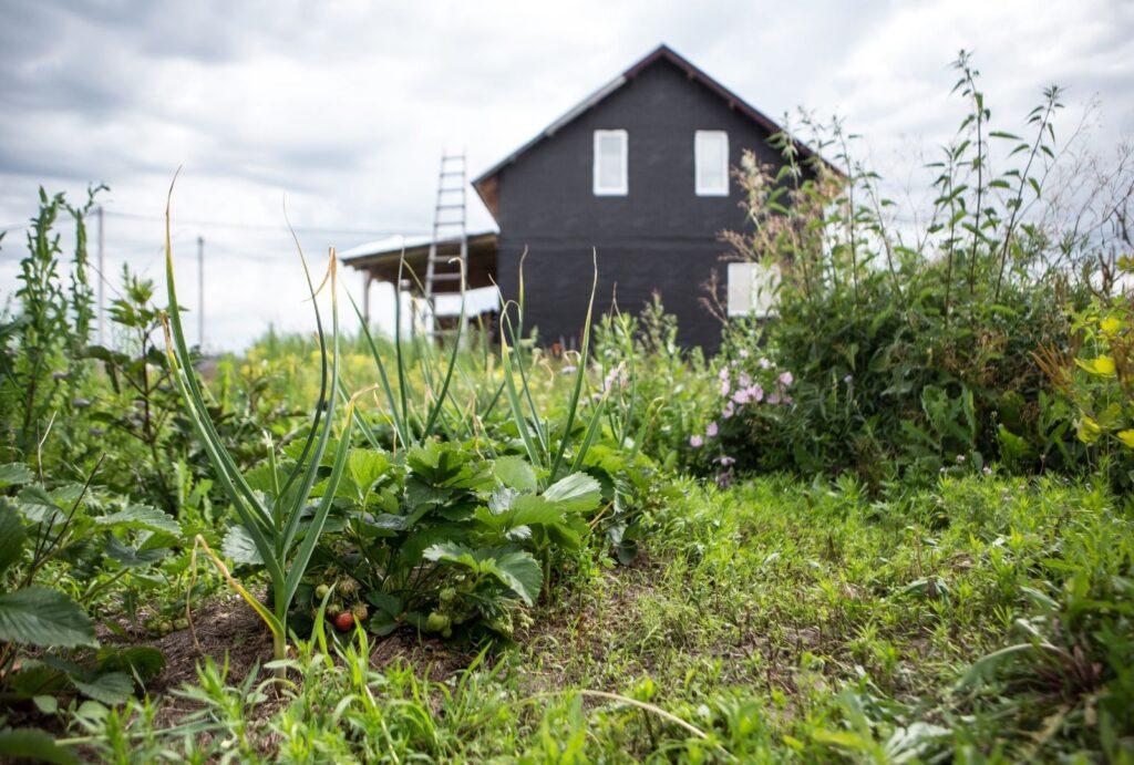 permacultura case in paglia